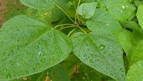 Πράσινο φύλλωμα στη δροσιά απόθεμα βίντεο