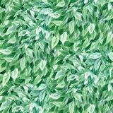 Πράσινο φύλλωμα υποβάθρου Watercolor Στοκ φωτογραφία με δικαίωμα ελεύθερης χρήσης