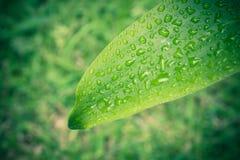 πράσινο φύλλο ανασκόπηση&sigmaf Υπόβαθρο φύλλων για το σχέδιο εκλεκτής ποιότητας Styl Στοκ εικόνα με δικαίωμα ελεύθερης χρήσης