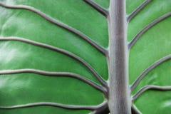 πράσινο φύλλο ανασκόπηση&sigmaf στοκ εικόνες με δικαίωμα ελεύθερης χρήσης
