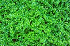 πράσινο φύλλο ανασκόπηση&sigmaf Στοκ φωτογραφίες με δικαίωμα ελεύθερης χρήσης