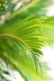 πράσινο φύλλο ανασκόπηση&sigmaf Στοκ φωτογραφία με δικαίωμα ελεύθερης χρήσης