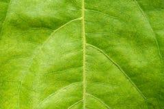 πράσινο φύλλο ανασκόπηση&sigmaf Στοκ Φωτογραφία