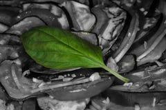 Πράσινο φύλλο βασιλικού στα γραπτά λαχανικά Στοκ εικόνα με δικαίωμα ελεύθερης χρήσης