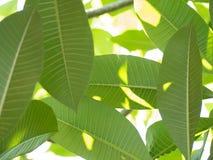 Πράσινο φύλλο ενάντια στον ήλιο Στοκ Εικόνες