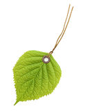 Πράσινο φύλλο ετικετών ετικεττών Στοκ Εικόνα