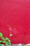 Πράσινο φύλλο κινηματογραφήσεων σε πρώτο πλάνο στον κόκκινο τοίχο τσιμέντου Στοκ εικόνες με δικαίωμα ελεύθερης χρήσης