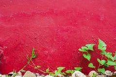 Πράσινο φύλλο κινηματογραφήσεων σε πρώτο πλάνο στον κόκκινο τοίχο τσιμέντου Στοκ Φωτογραφία