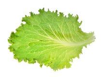 Πράσινο φύλλο μαρουλιού παγόβουνων Στοκ Εικόνα