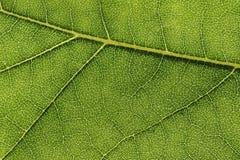 Πράσινο φύλλο με τη μακροεντολή σύστασης Στοκ φωτογραφία με δικαίωμα ελεύθερης χρήσης