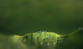 Πράσινο φύλλο με τις δροσοσταλίδες, όλη η μακροεντολή φυσικού υποβάθρου Στοκ Εικόνες