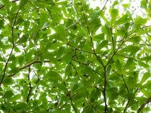 Πράσινο φύλλο με το βλέμμα επάνω στην άποψη Στοκ Εικόνες