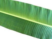 πράσινο φύλλο μπανανών Στοκ φωτογραφίες με δικαίωμα ελεύθερης χρήσης