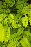 Πράσινο φύλλο ομάδας στον κήπο Στοκ εικόνες με δικαίωμα ελεύθερης χρήσης