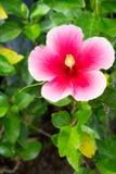 πράσινο φύλλο λουλουδ& Στοκ εικόνα με δικαίωμα ελεύθερης χρήσης