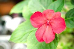 πράσινο φύλλο λουλουδ& Στοκ φωτογραφία με δικαίωμα ελεύθερης χρήσης