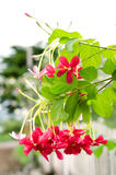 πράσινο φύλλο λουλουδ& Στοκ φωτογραφίες με δικαίωμα ελεύθερης χρήσης