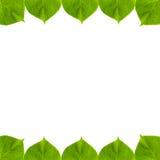πράσινο φύλλο πλαισίων Στοκ Φωτογραφίες