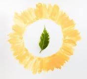 Πράσινο φύλλο στην κίτρινη κινηματογράφηση σε πρώτο πλάνο πλαισίων Στοκ Εικόνα