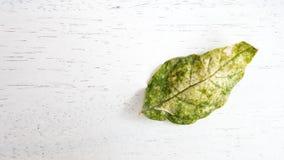 Πράσινο φύλλο στον εκλεκτής ποιότητας τόνο Στοκ Εικόνες