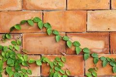 Πράσινο φύλλο στο τούβλο Στοκ εικόνες με δικαίωμα ελεύθερης χρήσης
