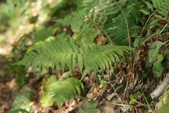 Πράσινο φύλλο το φθινόπωρο Στοκ Εικόνες