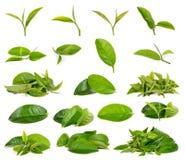 Πράσινο φύλλο τσαγιού που απομονώνεται στο άσπρο υπόβαθρο στοκ φωτογραφία