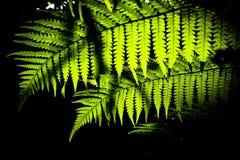 πράσινο φύλλο Στοκ Φωτογραφία