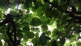 Πράσινο φύλλωμα Στοκ φωτογραφία με δικαίωμα ελεύθερης χρήσης