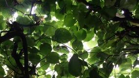 Πράσινο φύλλωμα Στοκ Εικόνες