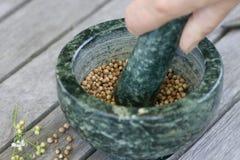 πράσινο χέρι κορίανδρου motar Στοκ Φωτογραφίες