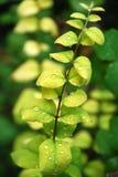 πράσινο χορτάρι Στοκ φωτογραφία με δικαίωμα ελεύθερης χρήσης