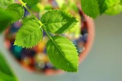 Πράσινο χρώμα Στοκ εικόνες με δικαίωμα ελεύθερης χρήσης