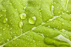 πράσινο ύδωρ φύλλων σταγονίδιων Στοκ Εικόνα