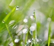 πράσινο ύδωρ χλόης απελευθερώσεων Στοκ φωτογραφία με δικαίωμα ελεύθερης χρήσης