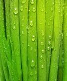 πράσινο ύδωρ χλόης απελευθερώσεων Στοκ Εικόνες