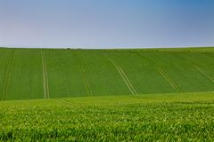 πράσινο ύφος απεικόνισης πεδίων κινούμενων σχεδίων Στοκ φωτογραφία με δικαίωμα ελεύθερης χρήσης