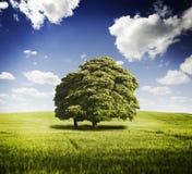 πράσινο ύφος απεικόνισης πεδίων κινούμενων σχεδίων Στοκ εικόνα με δικαίωμα ελεύθερης χρήσης