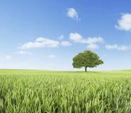 πράσινο ύφος απεικόνισης πεδίων κινούμενων σχεδίων στοκ εικόνα