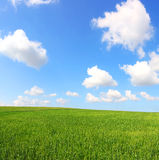 πράσινο ύφος απεικόνισης πεδίων κινούμενων σχεδίων Στοκ Φωτογραφία