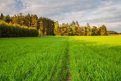 πράσινο ύφος απεικόνισης πεδίων κινούμενων σχεδίων Στοκ Φωτογραφίες