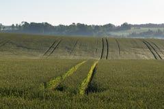 πράσινο ύφος απεικόνισης πεδίων κινούμενων σχεδίων Στοκ φωτογραφίες με δικαίωμα ελεύθερης χρήσης