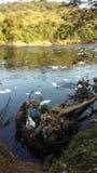 πράσινο ύδωρ ρύπανσης σημειώσεων Στοκ Φωτογραφία