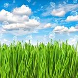 πράσινο ύδωρ χλόης απελε&upsilo το περιβάλλον έννοιας προσοχής ανασκόπησης απομόνωσε μικρό παίρνει το λευκό δέντρων Στοκ Εικόνα