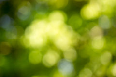 Πράσινο bokeh από το δέντρο Στοκ Φωτογραφία