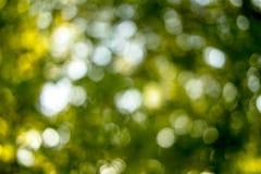 Πράσινο Bokeh Στοκ εικόνες με δικαίωμα ελεύθερης χρήσης