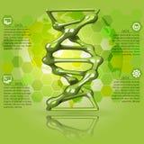 Πράσινο DNA infographics Στοκ εικόνα με δικαίωμα ελεύθερης χρήσης