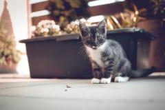 Πράσινο Eyed γατάκι στοκ εικόνες με δικαίωμα ελεύθερης χρήσης