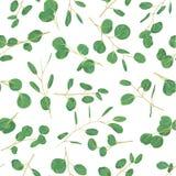 Πράσινο floral άνευ ραφής σχέδιο Watercolor με τον ευκάλυπτο γύρω από το λ απεικόνιση αποθεμάτων