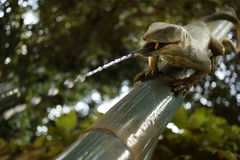 Πράσινο Gecko στο μπαμπού Στοκ Φωτογραφίες